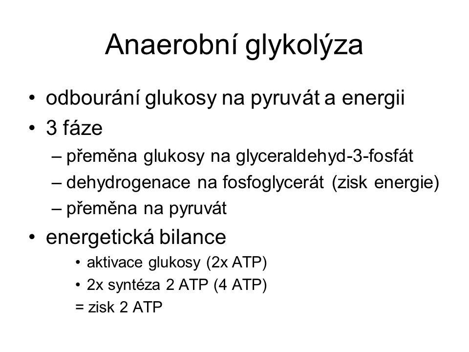 Anaerobní glykolýza odbourání glukosy na pyruvát a energii 3 fáze