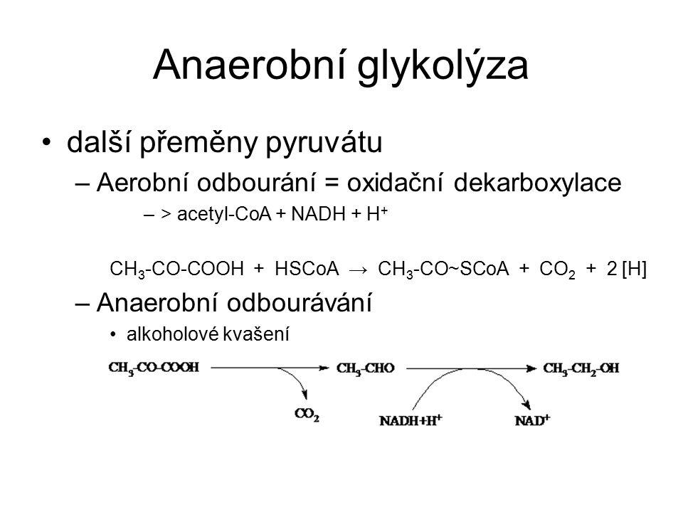 Anaerobní glykolýza další přeměny pyruvátu