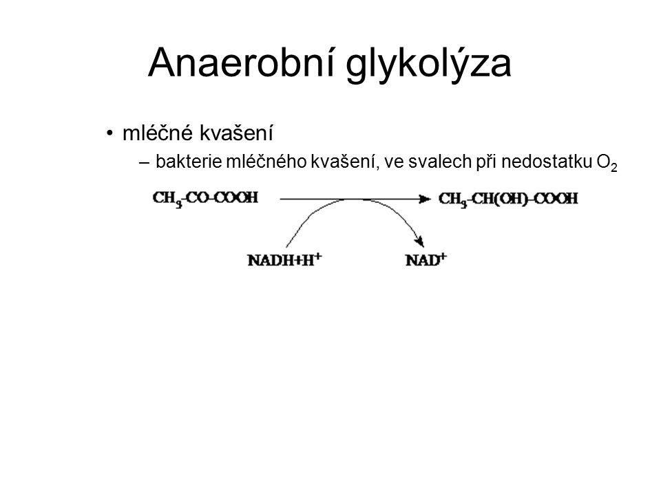 Anaerobní glykolýza mléčné kvašení
