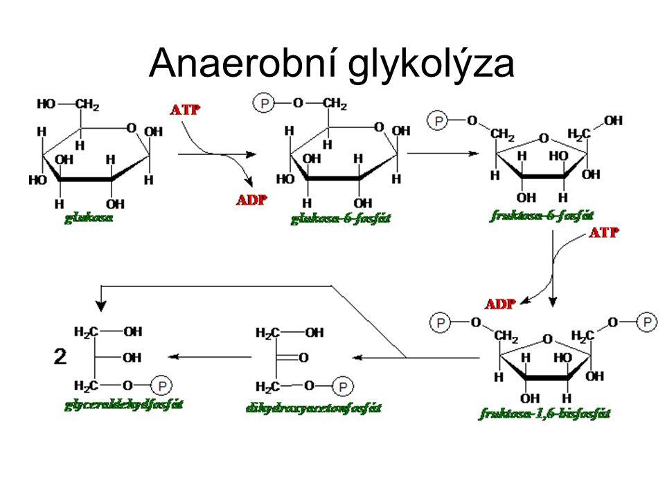 Anaerobní glykolýza