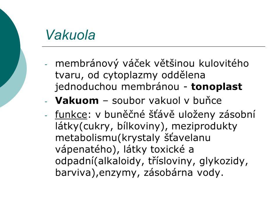 Vakuola membránový váček většinou kulovitého tvaru, od cytoplazmy oddělena jednoduchou membránou - tonoplast.