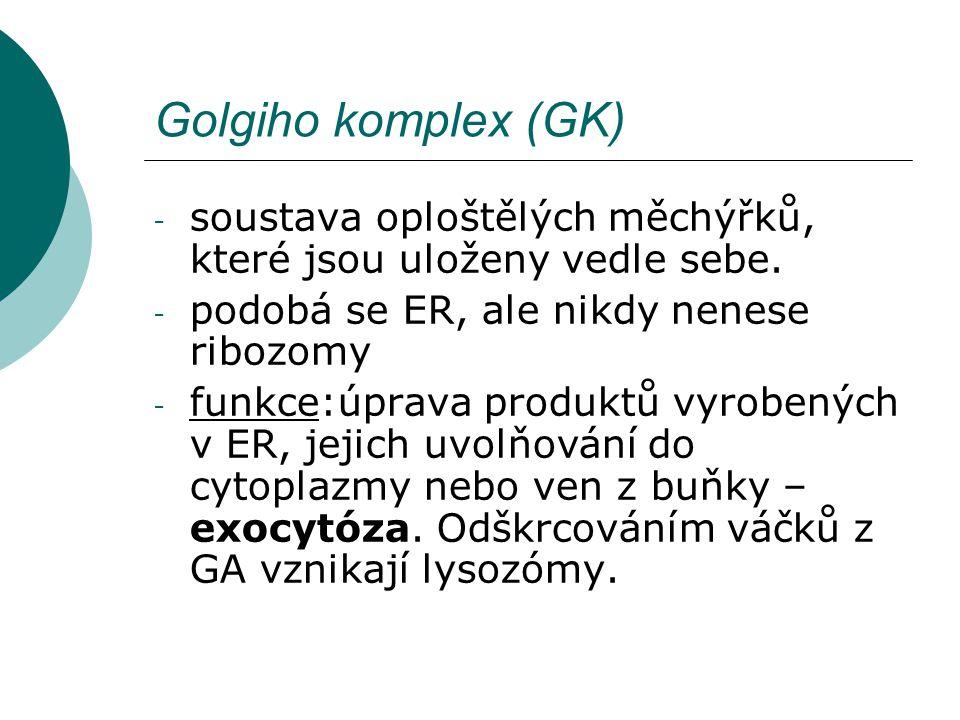 Golgiho komplex (GK) soustava oploštělých měchýřků, které jsou uloženy vedle sebe. podobá se ER, ale nikdy nenese ribozomy.