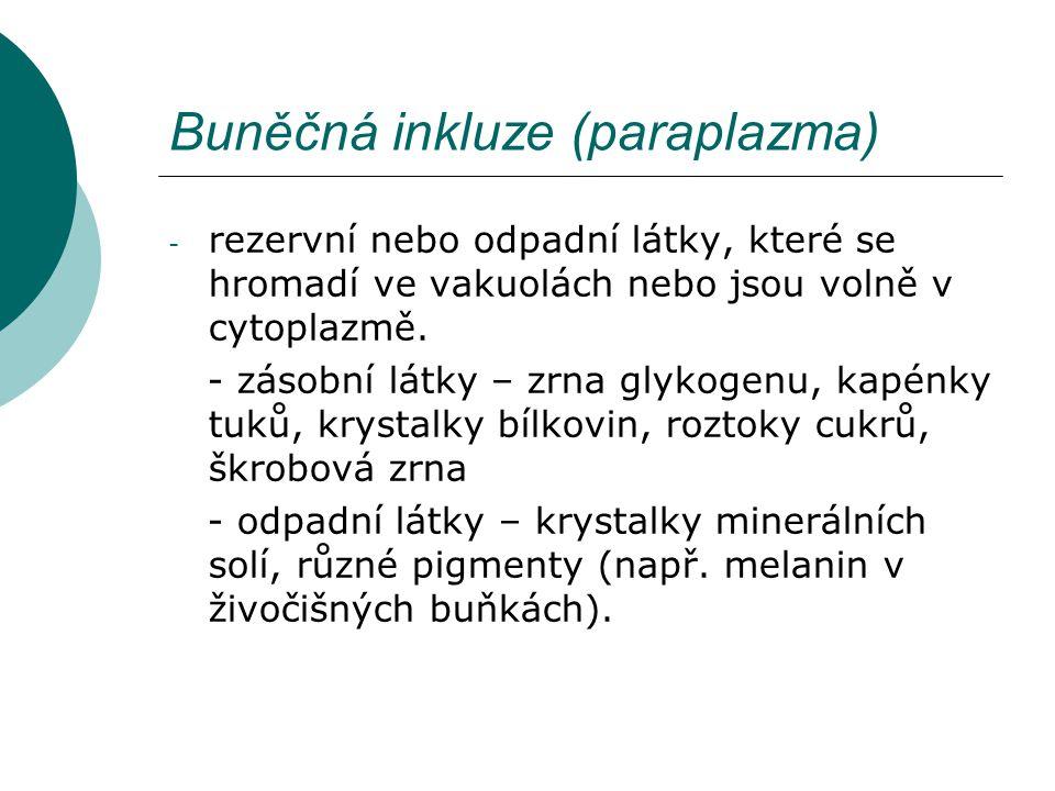 Buněčná inkluze (paraplazma)