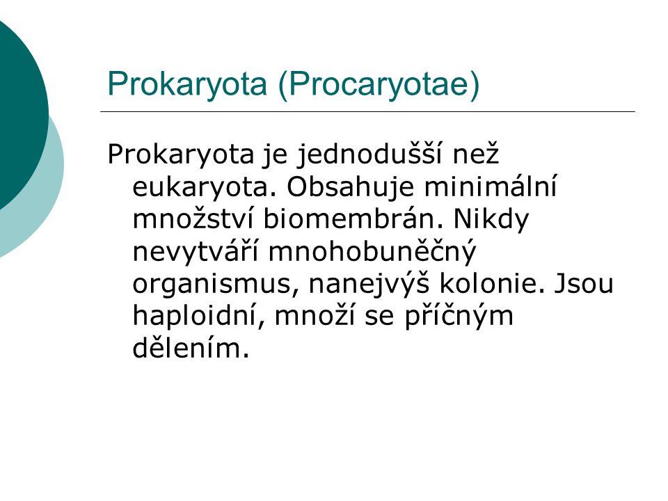 Prokaryota (Procaryotae)