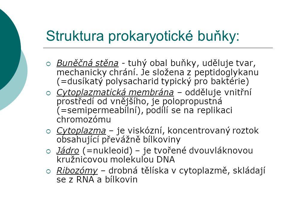 Struktura prokaryotické buňky: