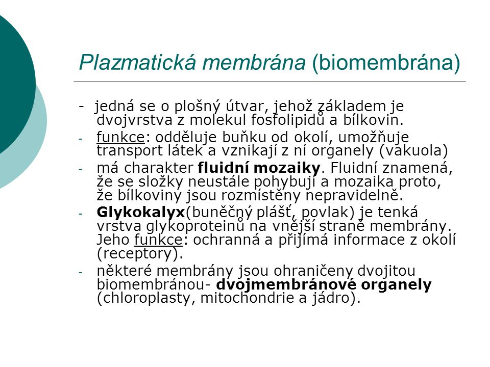 Plazmatická membrána (biomembrána)