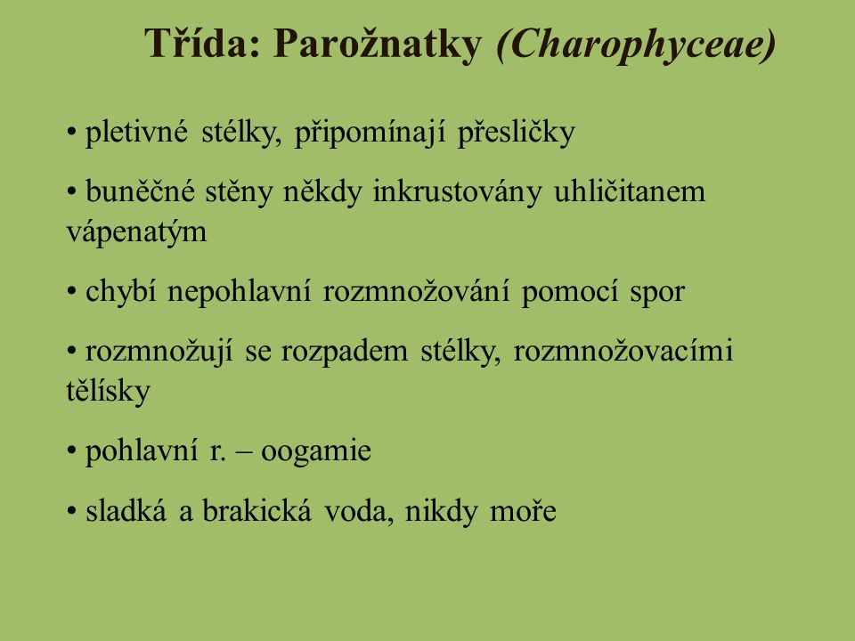Třída: Parožnatky (Charophyceae)