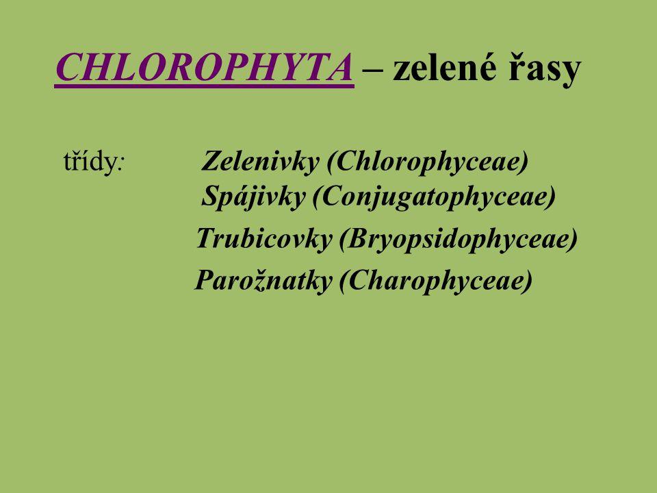 CHLOROPHYTA – zelené řasy