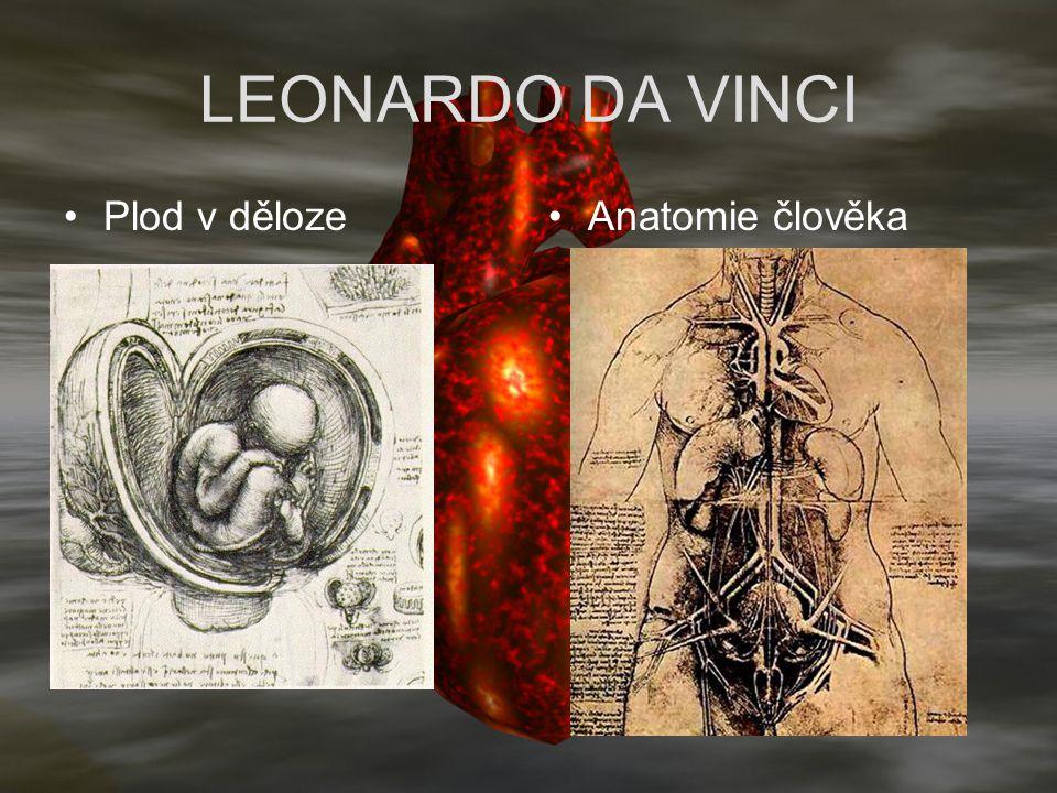 LEONARDO DA VINCI Plod v děloze Anatomie člověka