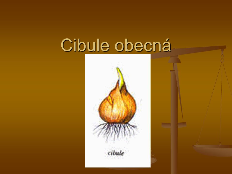 Cibule obecná