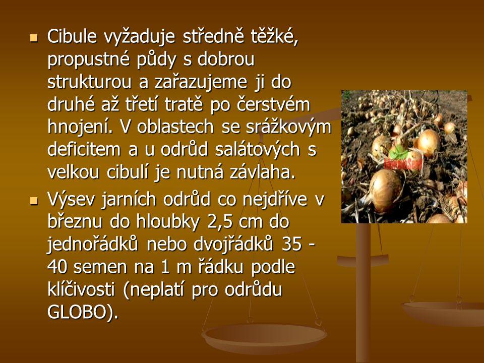 Cibule vyžaduje středně těžké, propustné půdy s dobrou strukturou a zařazujeme ji do druhé až třetí tratě po čerstvém hnojení. V oblastech se srážkovým deficitem a u odrůd salátových s velkou cibulí je nutná závlaha.