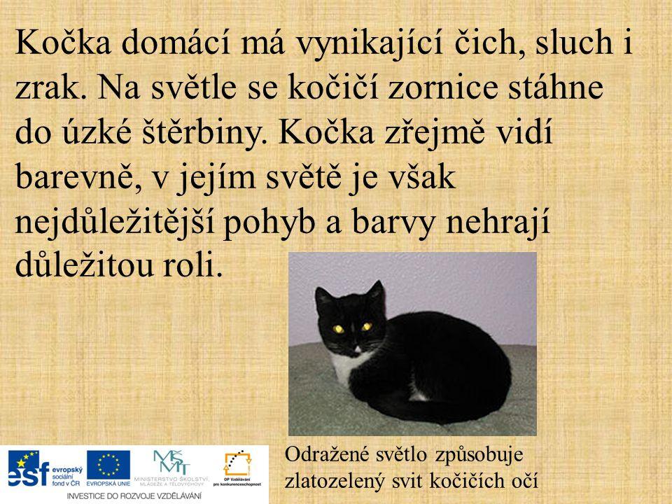 Kočka domácí má vynikající čich, sluch i zrak