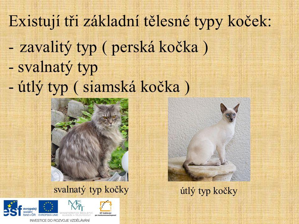 Existují tři základní tělesné typy koček: