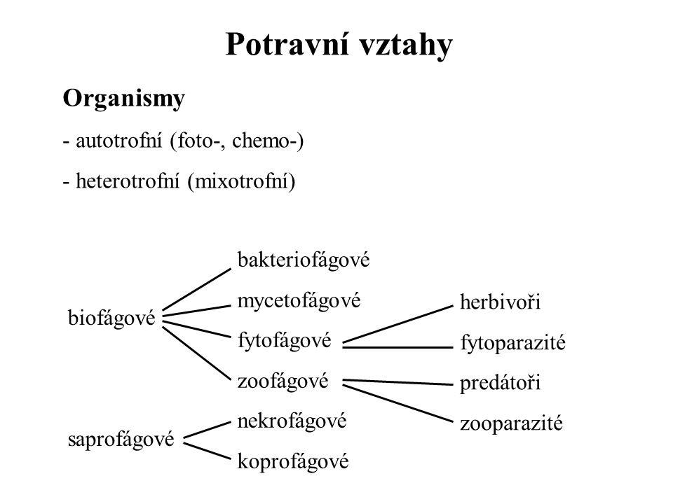 Potravní vztahy Organismy autotrofní (foto-, chemo-)