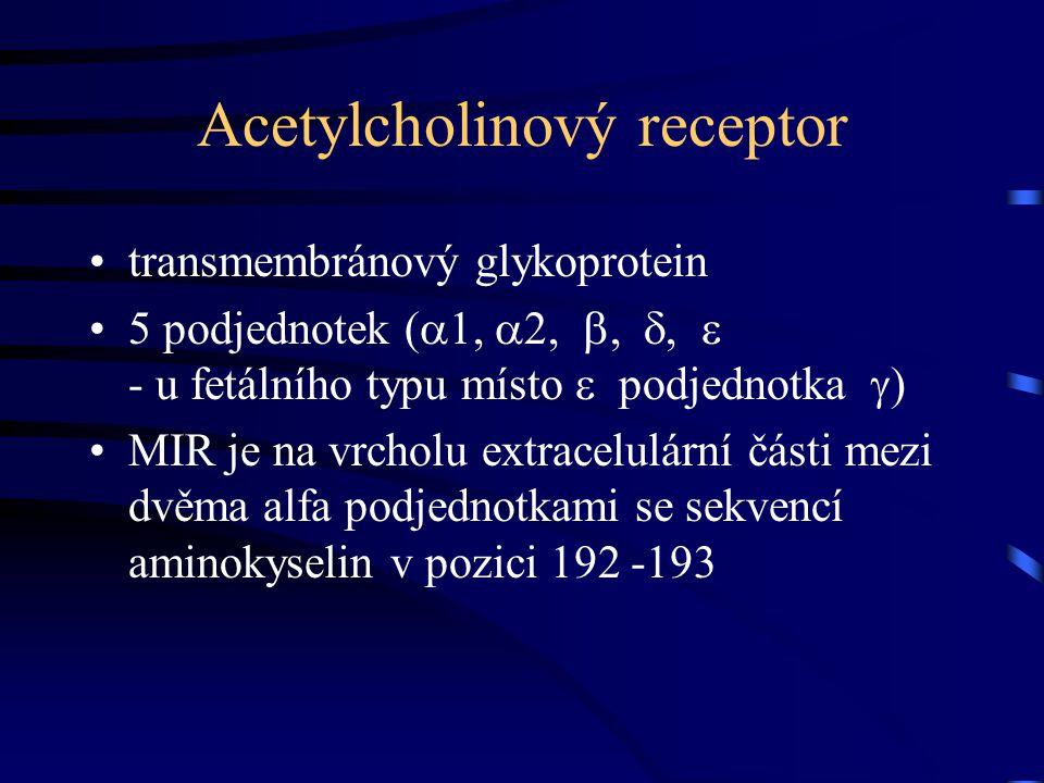 Acetylcholinový receptor
