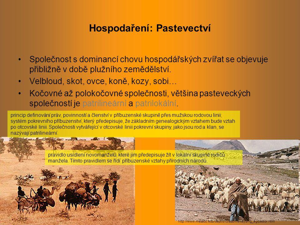 Hospodaření: Pastevectví