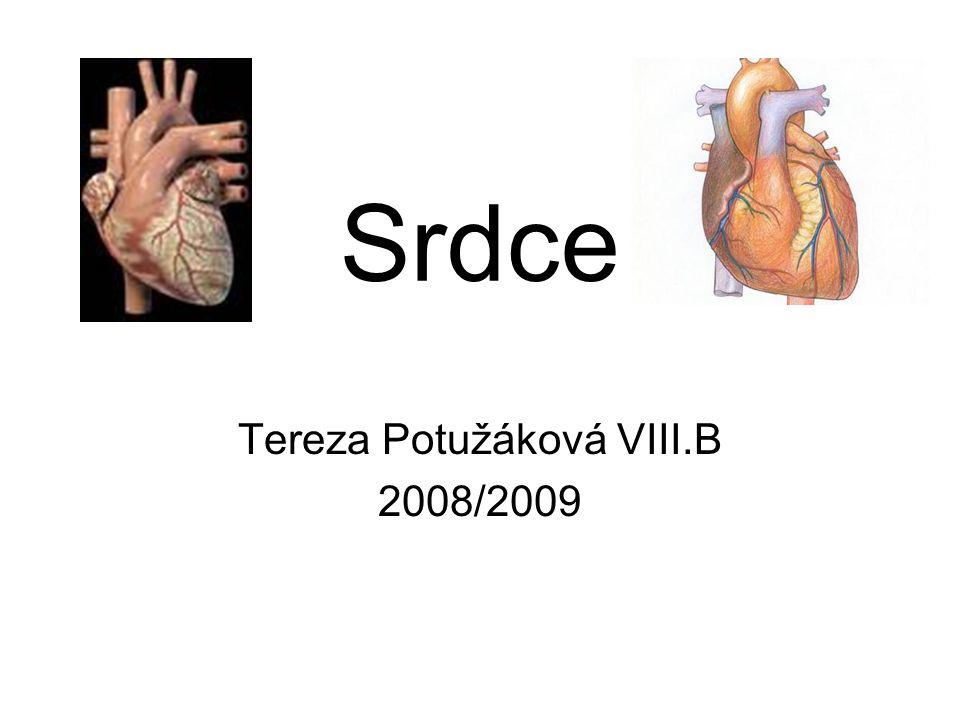 Tereza Potužáková VIII.B 2008/2009
