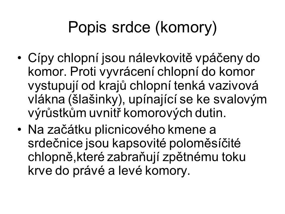 Popis srdce (komory)