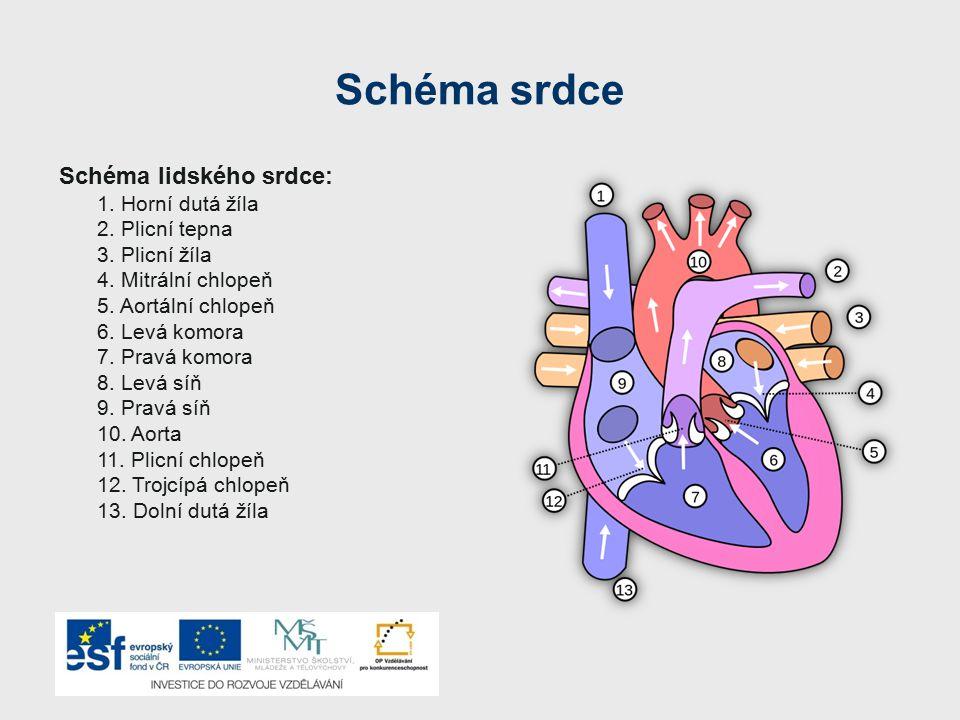 Schéma srdce Schéma lidského srdce: 1. Horní dutá žíla 2. Plicní tepna