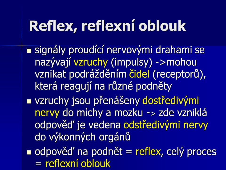 Reflex, reflexní oblouk