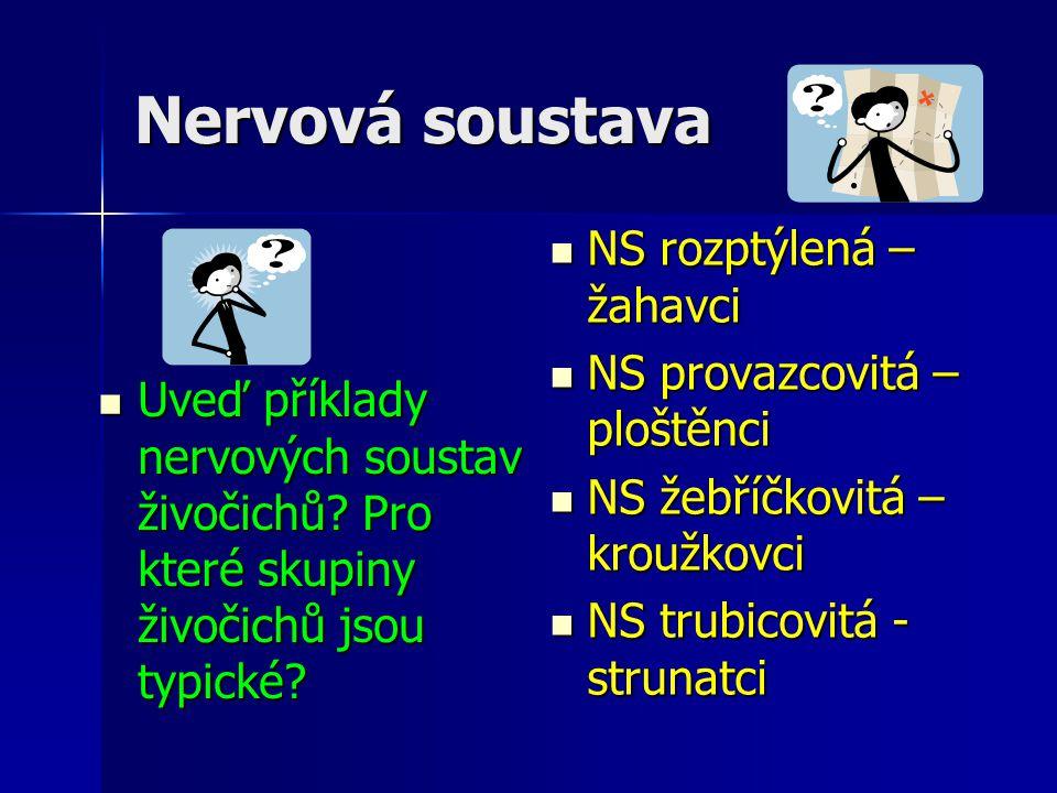Nervová soustava NS rozptýlená – žahavci NS provazcovitá – ploštěnci
