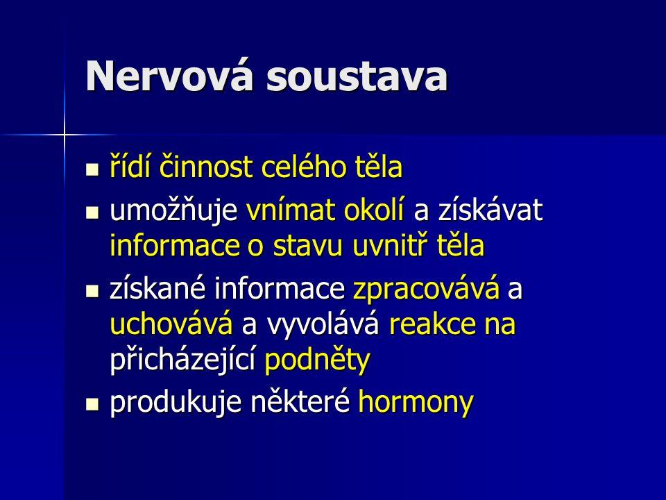 Nervová soustava řídí činnost celého těla