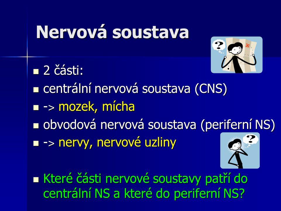 Nervová soustava 2 části: centrální nervová soustava (CNS)