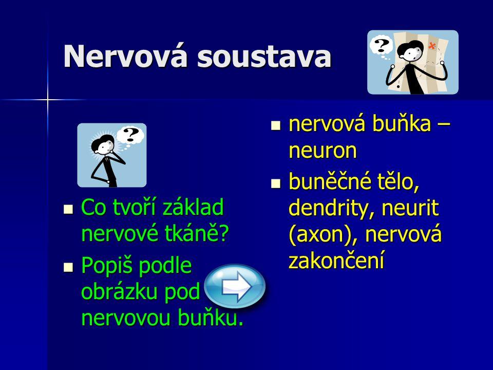Nervová soustava nervová buňka – neuron