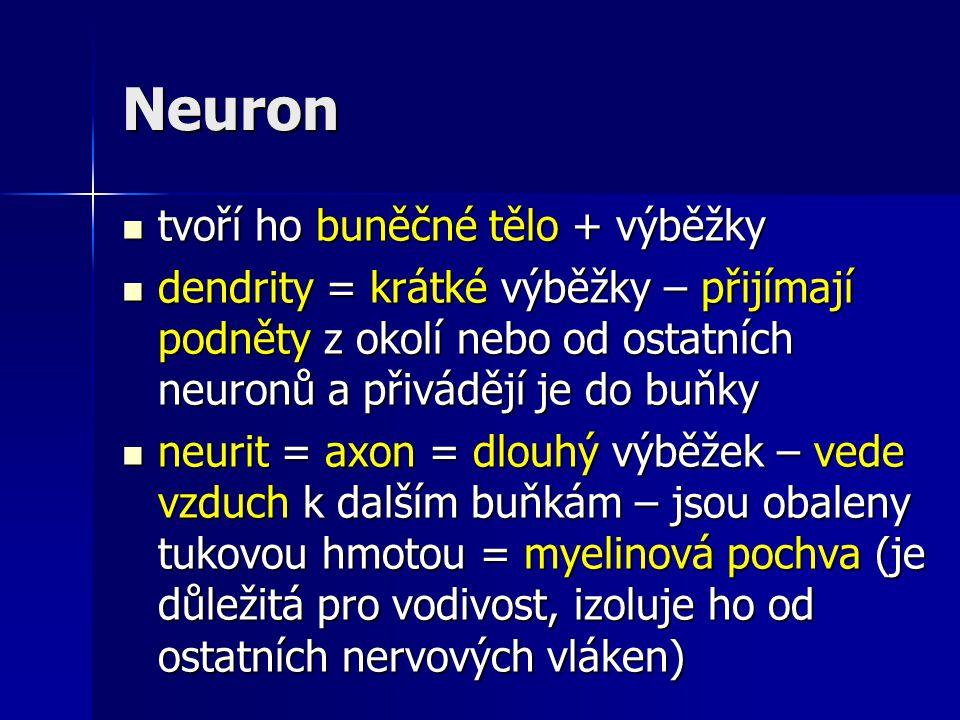 Neuron tvoří ho buněčné tělo + výběžky