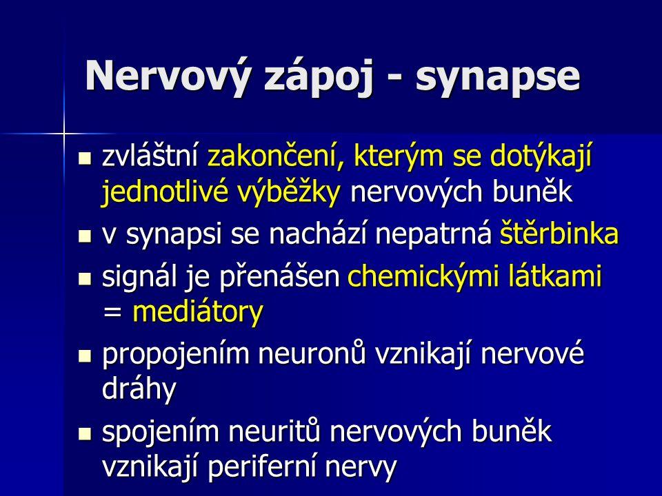 Nervový zápoj - synapse