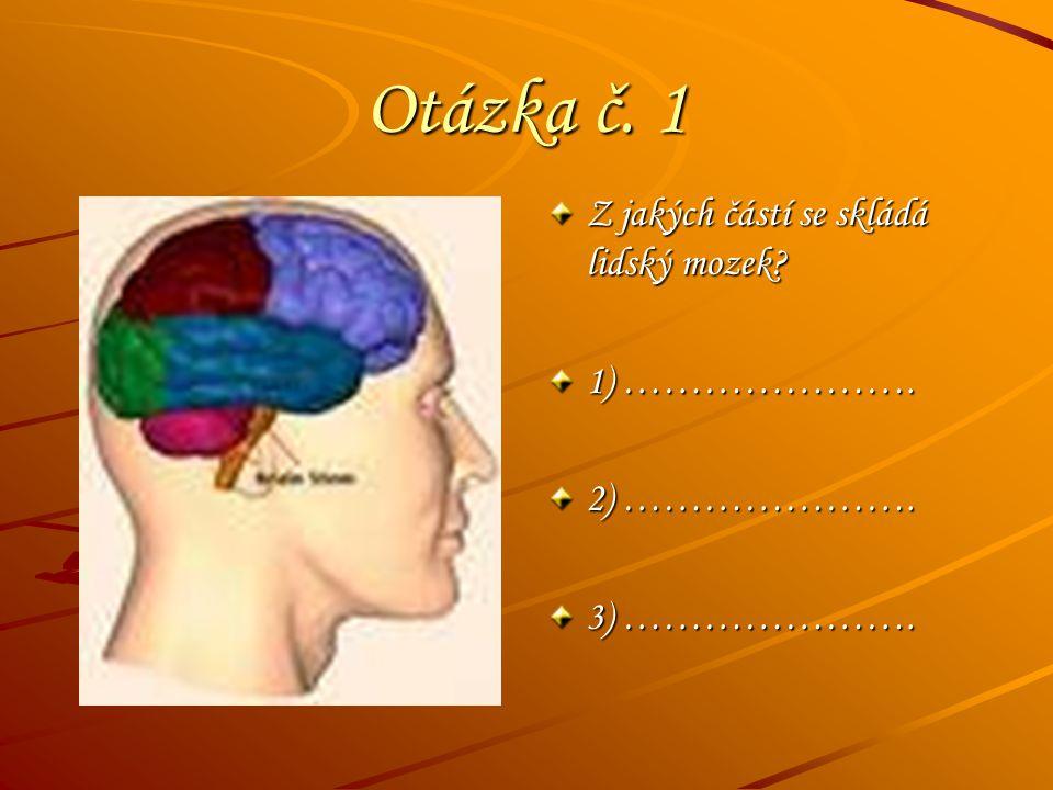 Otázka č. 1 Z jakých částí se skládá lidský mozek 1) ………………….