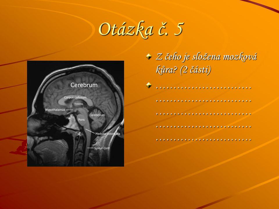Otázka č. 5 Z čeho je složena mozková kůra (2 části)