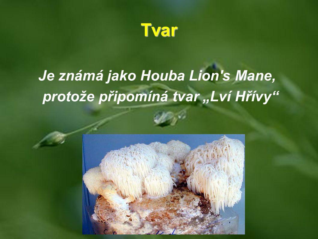"""Je známá jako Houba Lion s Mane, protože připomíná tvar """"Lví Hřívy"""