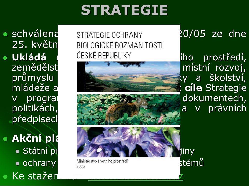 STRATEGIE schválena usnesením vlády č. 620/05 ze dne 25. května 2005