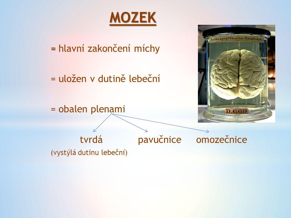 MOZEK = hlavní zakončení míchy = uložen v dutině lebeční