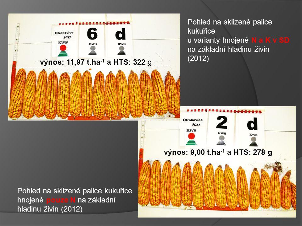 výnos: 11,97 t.ha-1 a HTS: 322 g Pohled na sklizené palice kukuřice. u varianty hnojené N a K v SD na základní hladinu živin (2012)