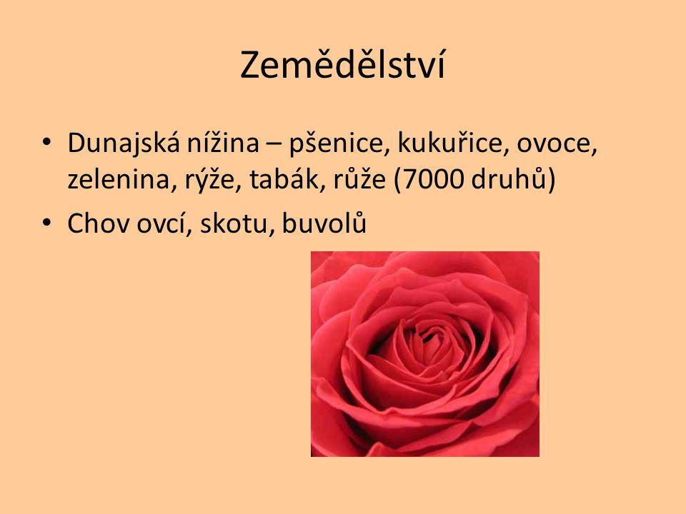 Zemědělství Dunajská nížina – pšenice, kukuřice, ovoce, zelenina, rýže, tabák, růže (7000 druhů) Chov ovcí, skotu, buvolů.