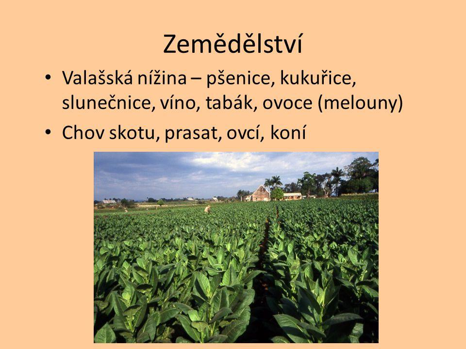 Zemědělství Valašská nížina – pšenice, kukuřice, slunečnice, víno, tabák, ovoce (melouny) Chov skotu, prasat, ovcí, koní.