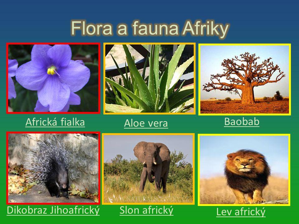 Flora a fauna Afriky Africká fialka Aloe vera Baobab