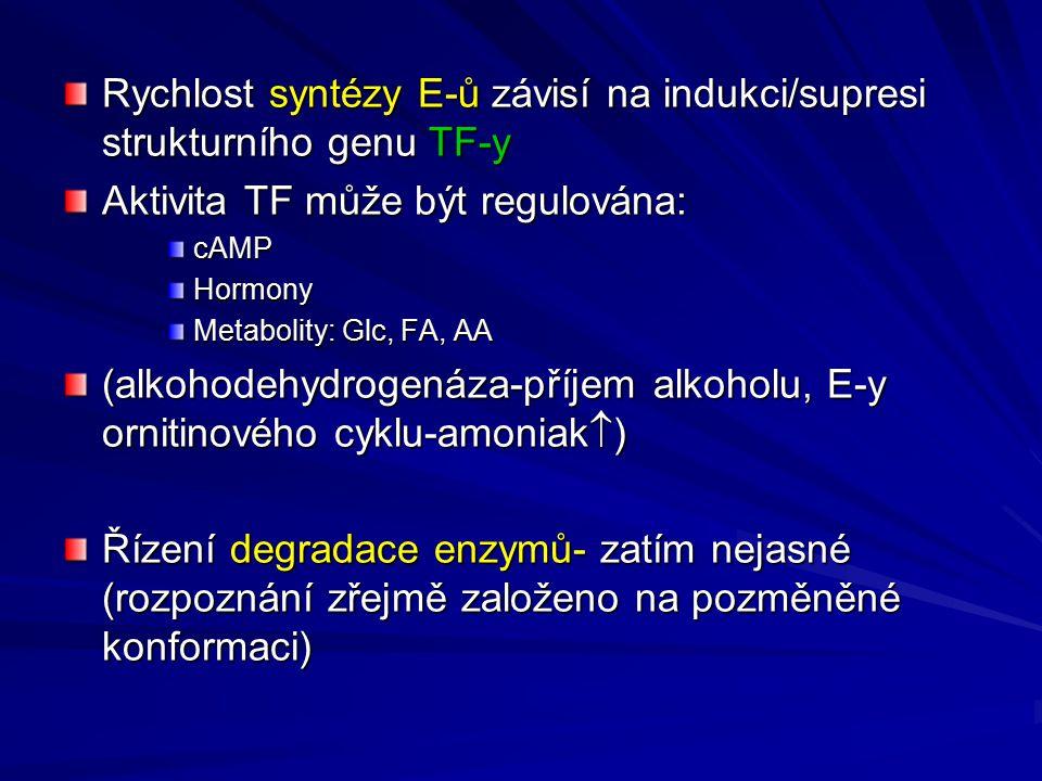 Rychlost syntézy E-ů závisí na indukci/supresi strukturního genu TF-y