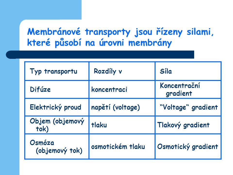 Membránové transporty jsou řízeny silami,