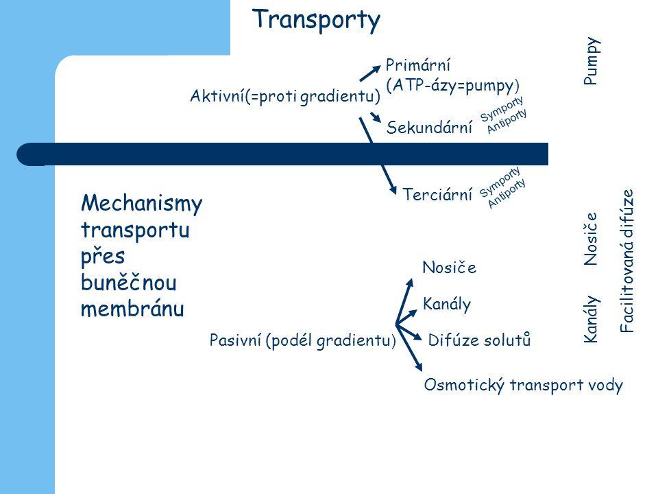 Transporty Mechanismy transportu přes buněčnou membránu Primární