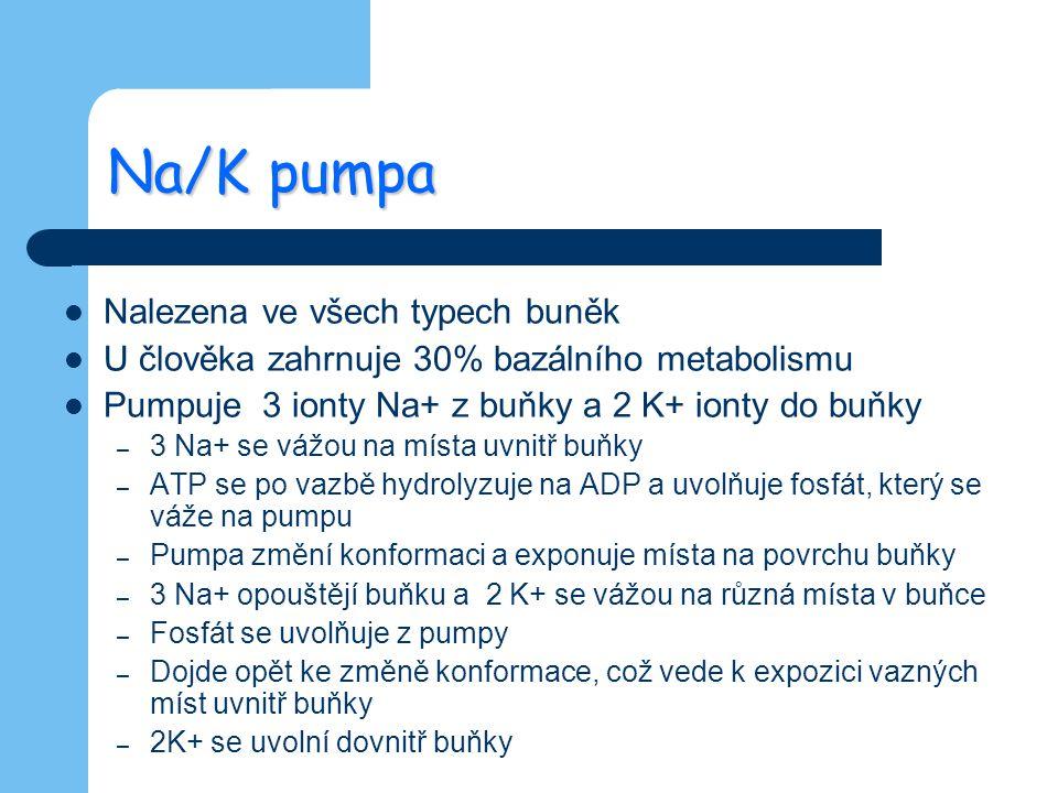 Na/K pumpa Nalezena ve všech typech buněk