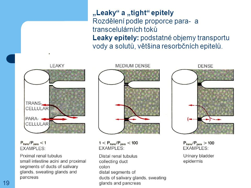 """Leaky a ""tight epitely"