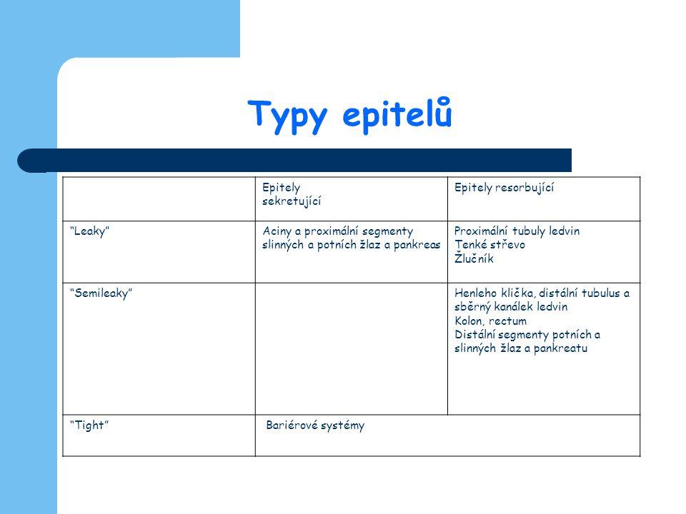 Typy epitelů Epitely sekretující Epitely resorbující Leaky