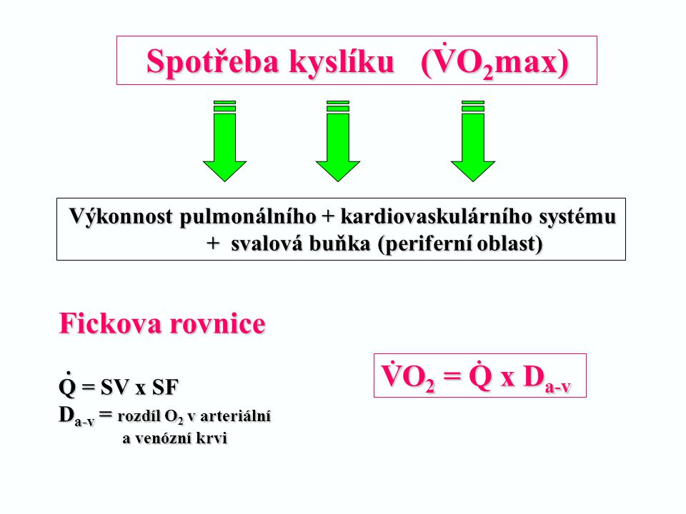 Spotřeba kyslíku (VO2max)