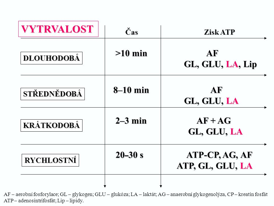 VYTRVALOST >10 min AF GL, GLU, LA, Lip 8–10 min AF GL, GLU, LA
