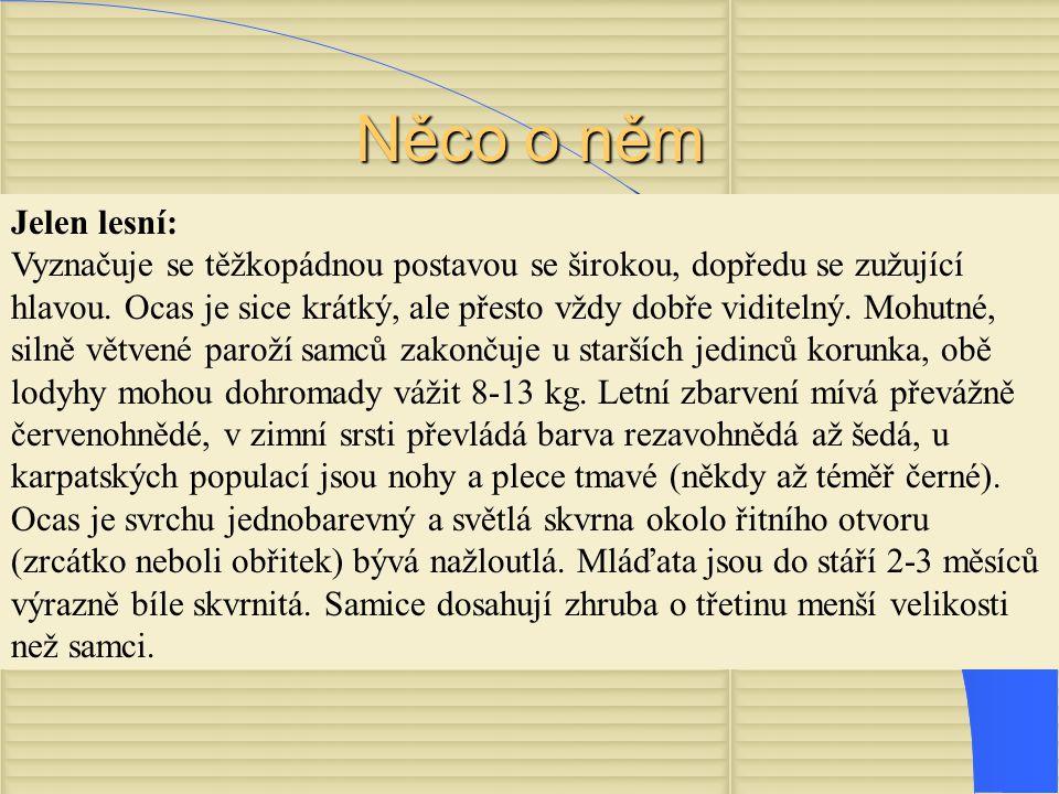 Něco o něm Jelen lesní: