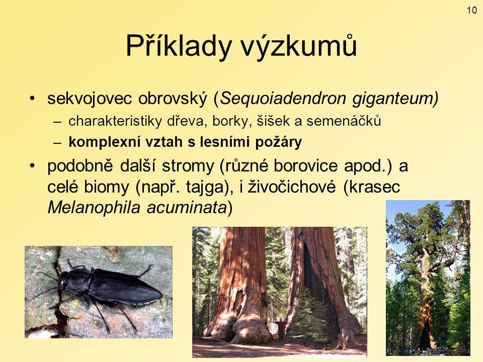 Příklady výzkumů sekvojovec obrovský (Sequoiadendron giganteum)