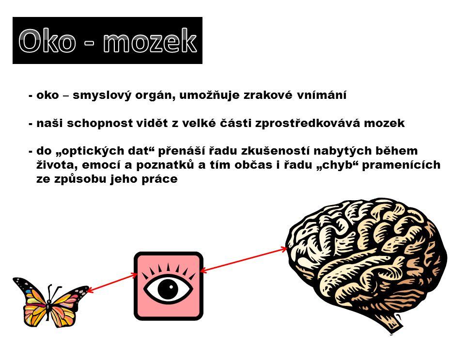 Oko - mozek oko – smyslový orgán, umožňuje zrakové vnímání